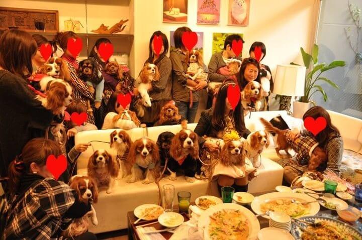 Pet Business in Japan