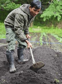 Field work is performed manually.