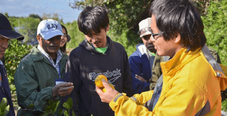 Participants on a study visit at a mikan farm